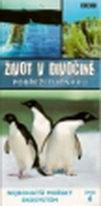 Život v divočině 6 - pobřeží tučňáků - DVD