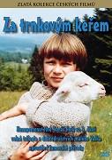 Za trnkovým keřem(plast)-DVD