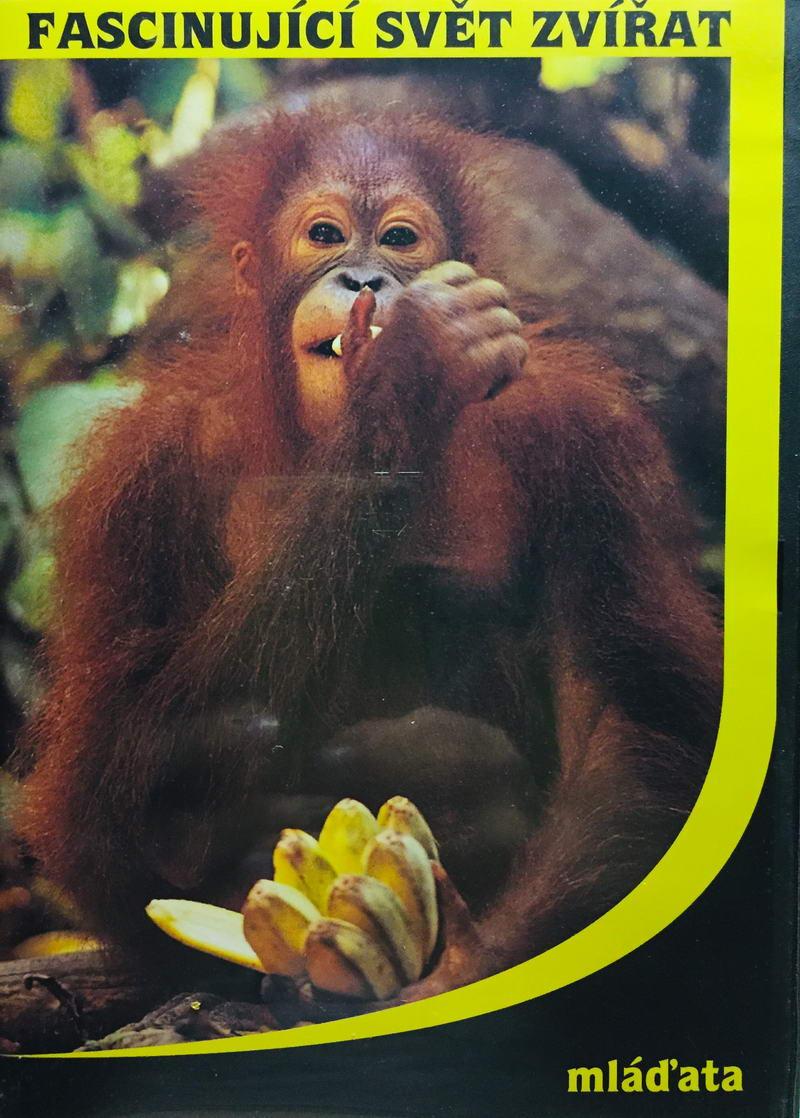 Fascinující svět zvířat - mláďata - DVD /plast/